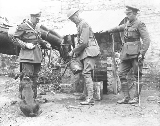 Black and white photograph of three men (two officers and a private), a horse and a dog. The soldier is giving the horse a pail of grain.