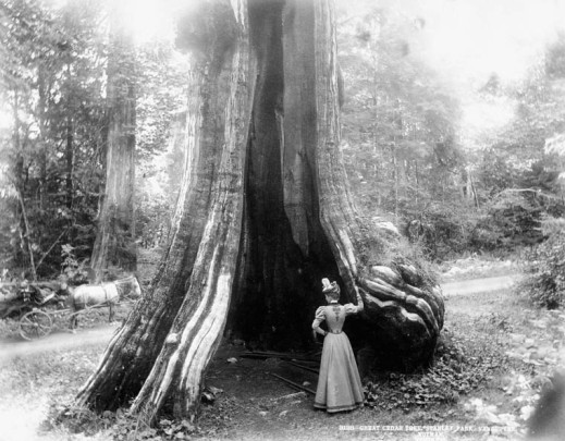 Black-and-white photograph of a woman standing in front of a large, hollowed-out tree.
