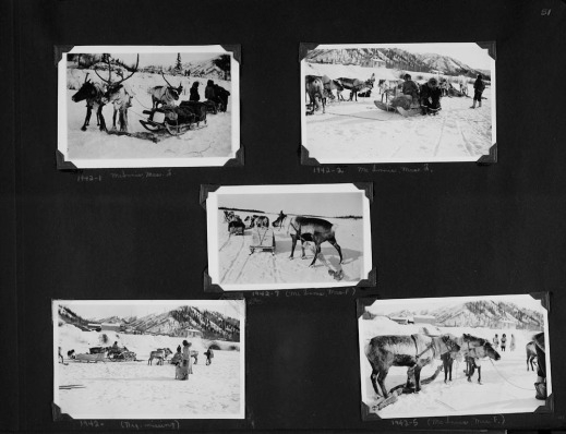 Black-and-white photograph of a photo album collage. There are five photographs showing reindeer pulling sleds of various kinds, with people in the background. The pictures are labelled and some of the people are identified.