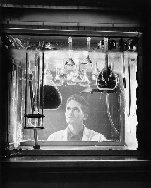 Black and white photograph showing a laboratory technician observing round-bottom flasks that contain various solutions and are suspended in a tank filled with liquid.