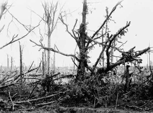 A black-and-white photograph of a devastated forest, only a few tree trunks are left standing