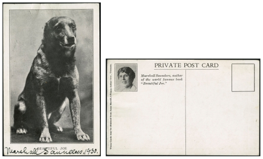 "Black-and-white postcard featuring a photograph of a dark dog with no ears in a sitting position. The postcard is captioned ""BEAUTIFUL JOE"" and autographed in black ink, ""Marshall Saunders, 1930."" The back of the postcard features a small picture of Margaret Marshall Saunders with the caption, ""Marshall Saunders, author of the world famous book, 'Beautiful Joe.'"" The postcard has not been mailed."