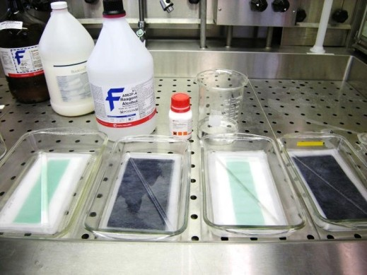 Colour photograph of laboratory material: four clear glass containers placed side by side with a sheet of paper in each one and bottles of chemicals behind them.