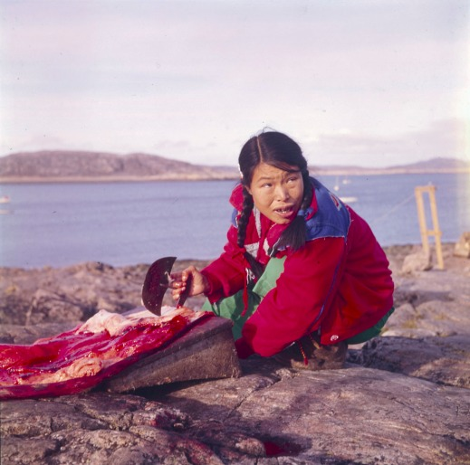 A colour photograph of an Inuit woman wearing a red cloth jacket, crouching on a rocky coastline and scraping fat from a seal skin with an ulu (a woman's knife).