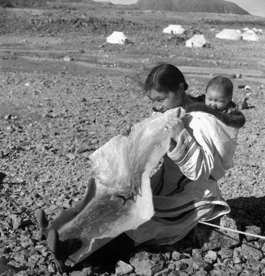 Black-and-white photograph of an Inuit woman seated on the ground, with her infant in her amauti (parka), and chewing on a large piece of sealskin.