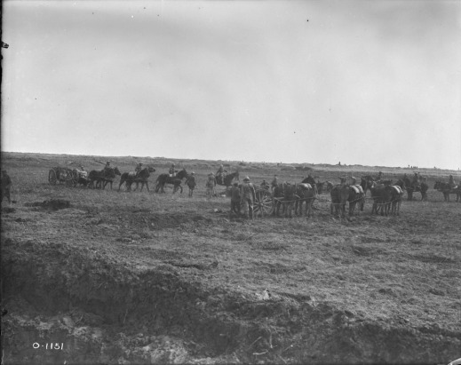 A black-and-white photograph of at least three teams of six horses pulling cannons into place.