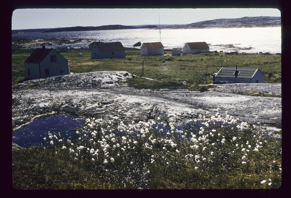 A colour photograph of a community of wooden houses on the shores of a water body. There are flowers in the foreground.