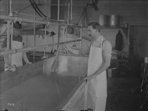 A black-and-white photograph of two men checking the temperature of milk at a cheese factory.