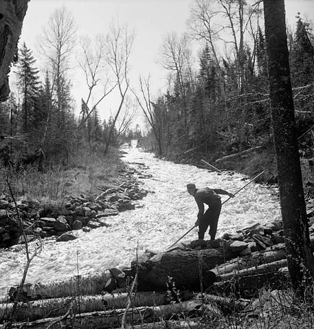 A black-and-white photograph of a man standing at the river's edge with a long stick pushing logs away to keep them moving downstream.