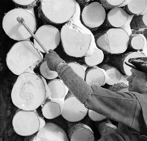 "A black-and-white photograph of a lumberman hammering the Company stamp, the letter ""G,"" meaning Gatineau, onto the ends of 16-foot logs."