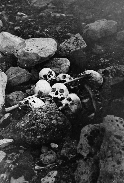 Black-and-white photograph depicting 5 skulls against black rocks. The skulls were found in 1945 during an expedition by William Skinner and Paddy Gibson.