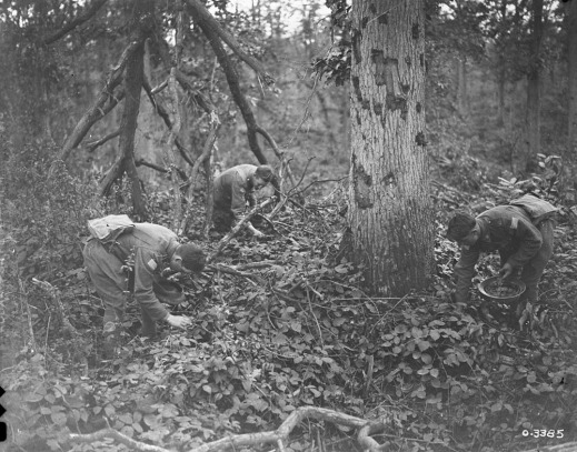 A black-and-white photograph of three soldiers bent at the waist, searching around trees and through bushes for blackberries.