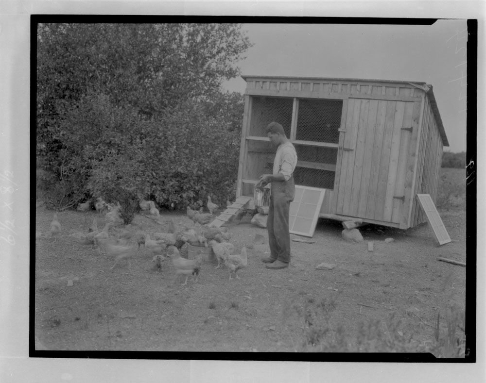 A black-and-white photograph of a man feeding chickens next to their coop.