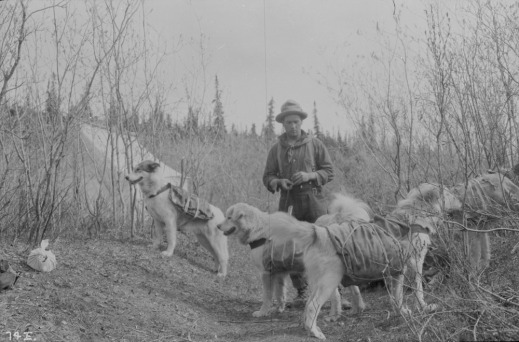 A black-and-white photograph of a man with his four dogs wearing pack harnesses.