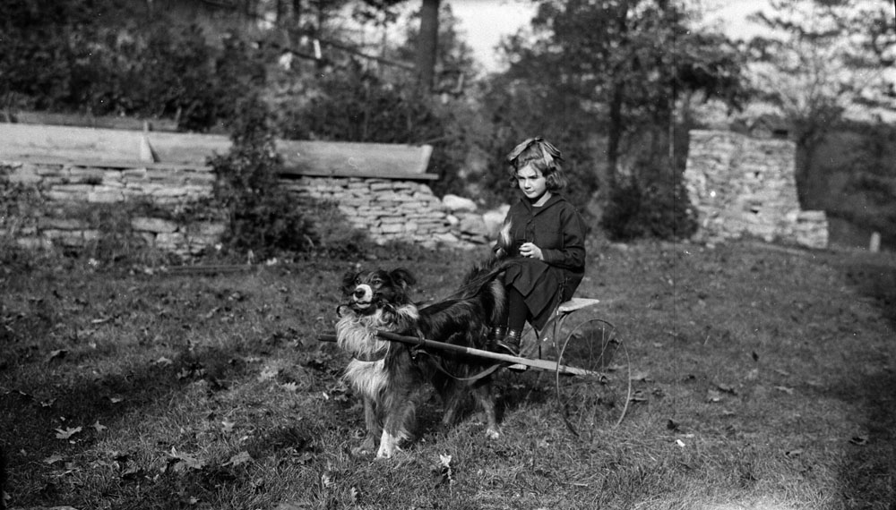 A black-and-white photograph of a dog harnessed to a small two-wheeled passenger cart. A girl sits on the cart and holds the reins to her dog.