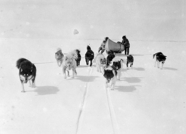 A black-and-white photograph of 11 dogs pulling a sled through the snow. Two men are supporting and balancing the weight of a large canoe on the sled.