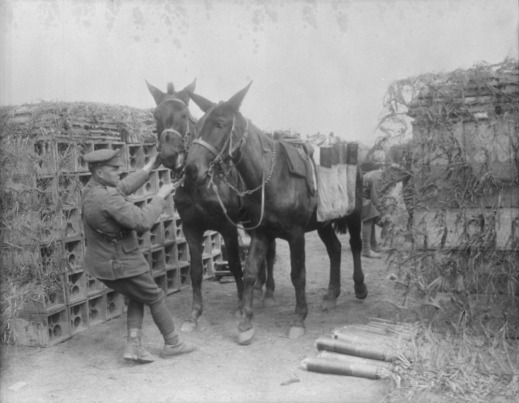A black-and-white photograph of soldier trying to coax two pack mules to move.