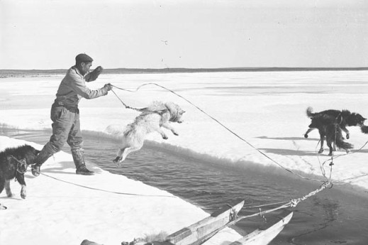 A black-and-white photo of a sled dog jumping across an opening of water, while a man holds its reins.