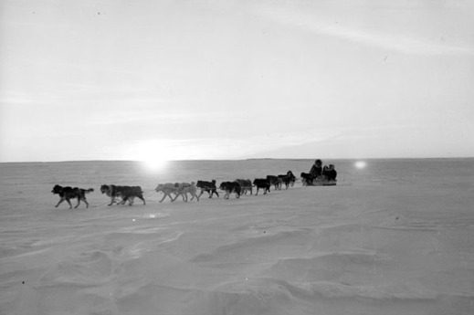 Black-and-white photo of a team of sled dogs pulling a sled across an expanse of snow.