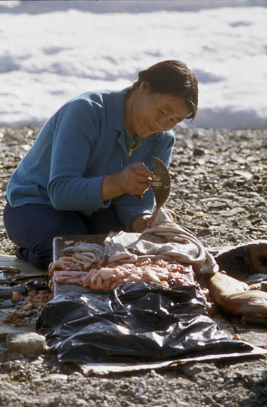 A colour photo of an Inuk woman using an ulu to cut meat