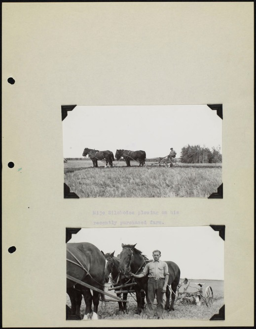 Page from an album with two black and white photographs. One showing a team of horses pulling a plough, and the other shows a man standing with his team of horses. The photos are captioned with typed text.
