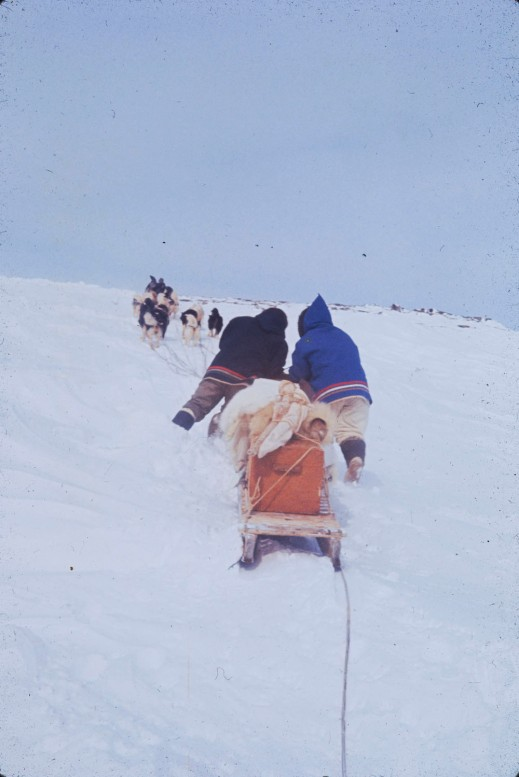 A colour photo of two men with a team of sled dogs pulling a sled up a hill.