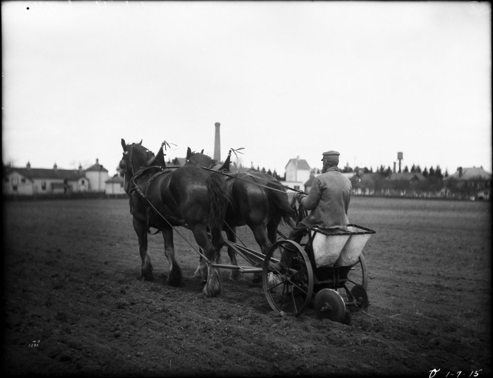 A black-and-white photograph of a man riding a potato planter pulled by two horses.