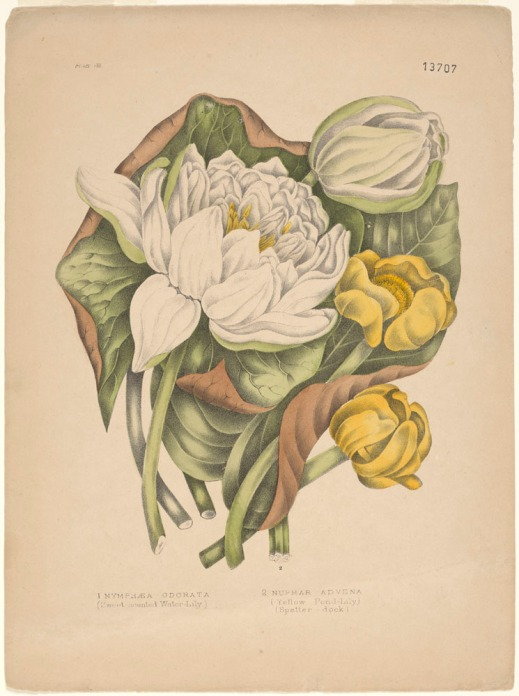 Two white lilies, one open, one closed, and two yellow lilies lying on a bed of green leaves.