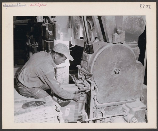 """Black-and-white photograph of a worker filling a bag by holding it under the spout of a machine. A stack of empty bags sits next to him. The bags read """"CIL Fertilizer."""""""