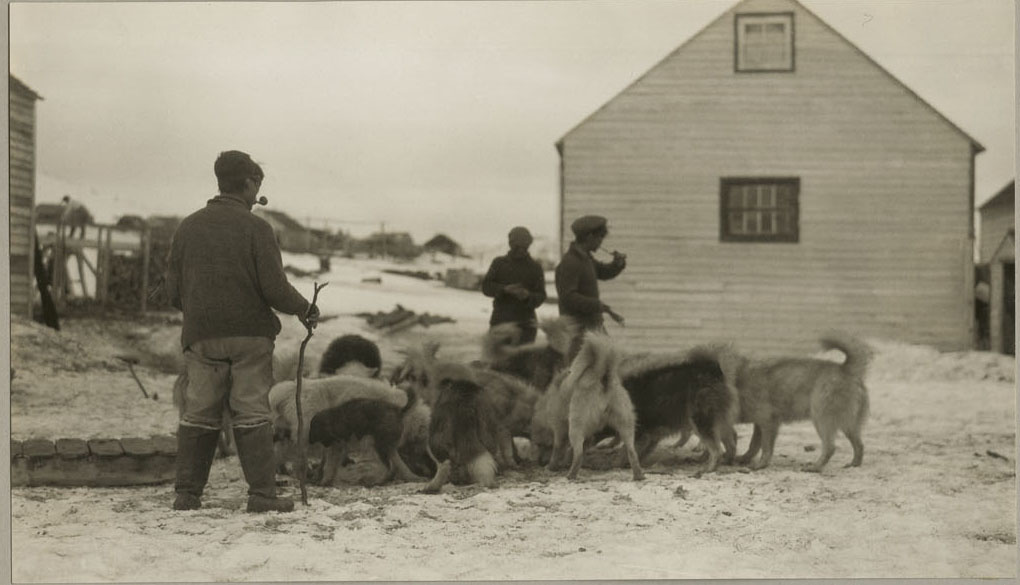 A black and white photograph of three men standing around a group of sled dogs, who are eating. There is a white building in the background.